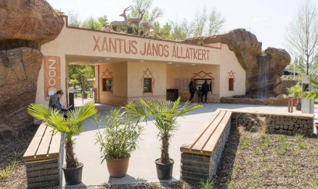 Tigris-, elefánt- és pingvinkifutó épül a győri állatkertben