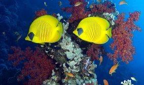 Bővített Sharm el Sheikh-i charterek az Anubis Travelnél