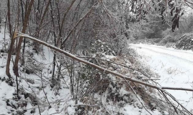Balesetveszélyes az erdőjárás a Pilisi Parkerdőben