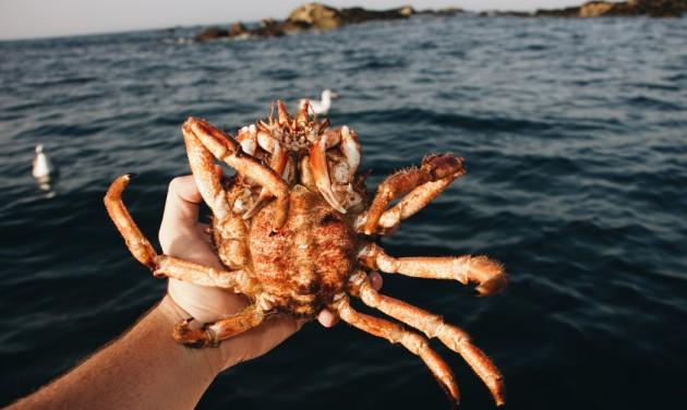 Oliver Roellinger gasztronómiai verseny a tengeri élővilág megőrzéséért