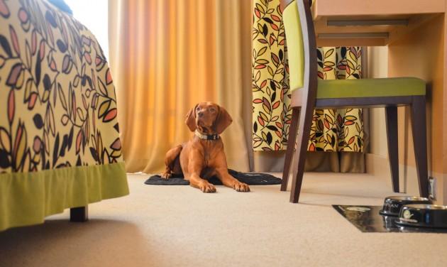 Egyre többen keresik a kutyabarát szálláshelyeket