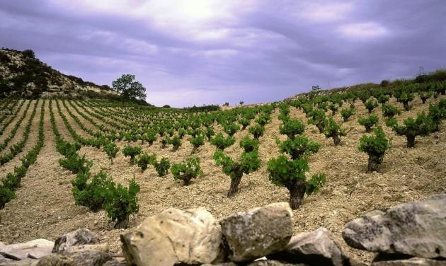 Ciprusi borok és a Neckermann