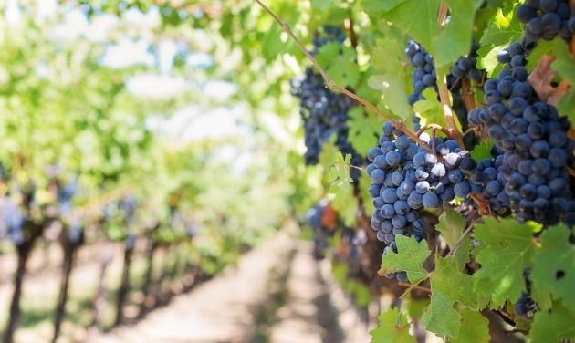Munkaerőpiaci felmérés a szőlő-bor ágazatban