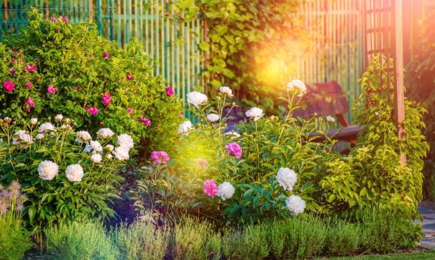 """Célegyenesben a """"Virágos balkonok, virágos kertek"""