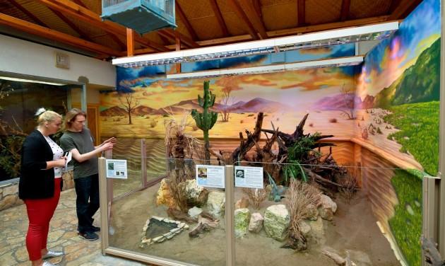 Újdonság a debreceni állatkertben