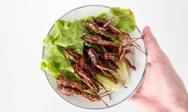 Tücsök és bogár is kerül a tányérra az idei Kutatók Éjszakáján a BGE-n