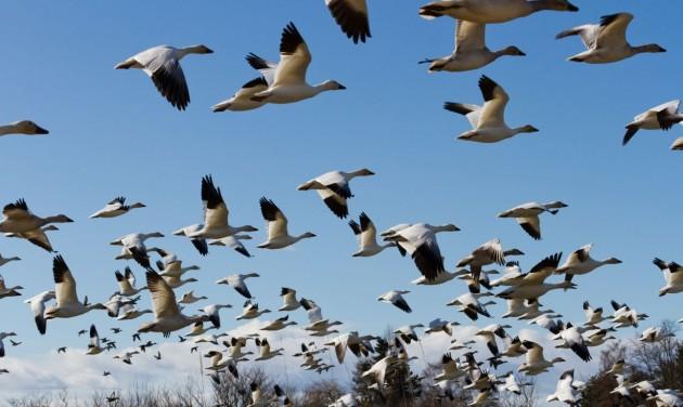 Hétvégén a madarakat figyeli egész Európa
