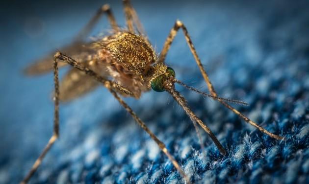 Már készülnek a szúnyogirtásra a Balatonnál