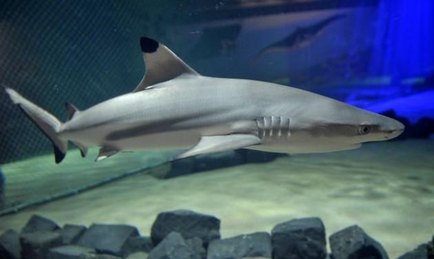 Látogatható a cápasuli a fővárosi állatkertben