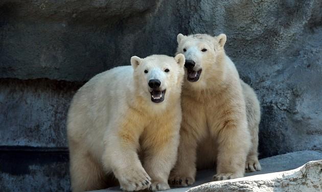 Mesevár, Mesepark és új állatok a Fővárosi Állatkertben
