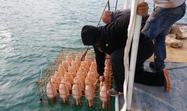 Víz alatti borászat Horvátországban