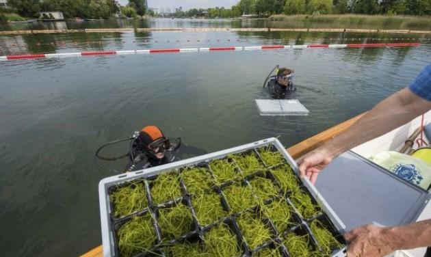 Búvárok kertészkednek a Duna bécsi holtágában