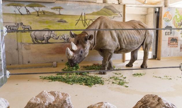 Fogadóközpont, zsiráf- és orrszarvúház a győri állatkertben