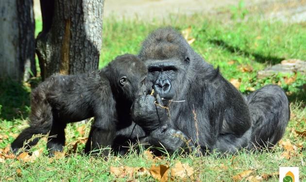 Az őszi szünetben 200 forintért mehetnek az állatkertbe a gyerekek