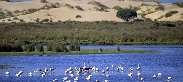 Veszélyben a dél-spanyolországi Donana Nemzeti Park