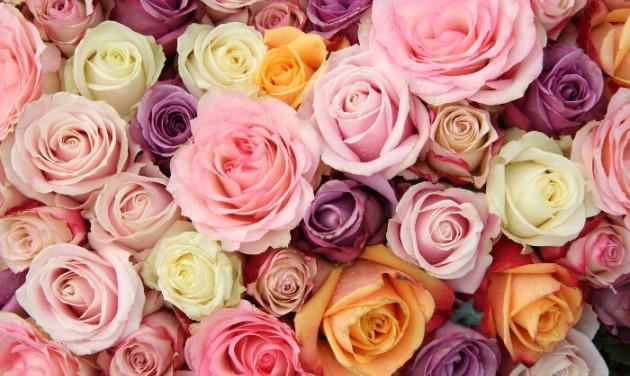 A szőregi rózsatő is hungarikum lehet