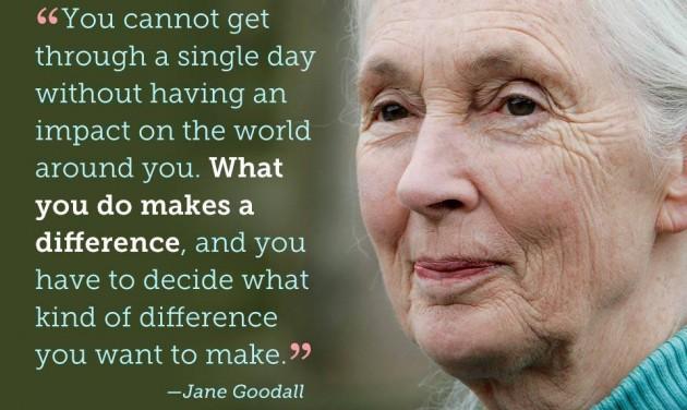 Jane Goodall nyomában, Hűvösvölgyben