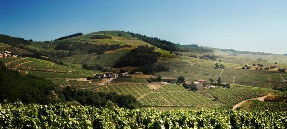 Átlagos termésre, nagyon jó minőségre számítanak a francia bortermelők