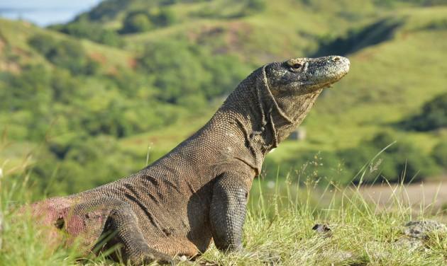 Ökoturizmus a rinocéroszok és sárkányok földjén