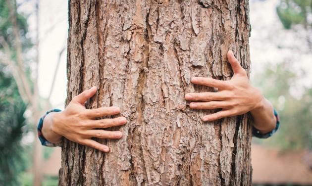 A faölelgetéstől a csipőprotézisig