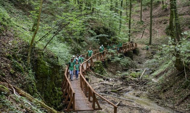 Megnyíltak az erdei, vízi és kerékpáros vándortáborok