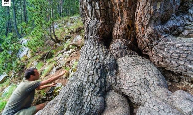 Pert nyert a WWF a Pirin Nemzeti Park ügyében