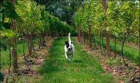 Hol borozhatnak a kutyabarátok?