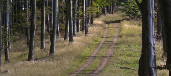 Idegenforgalmi fejlesztések a nógrádi erdőkben