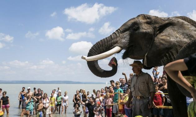 Hétvégi programajánló: elefántfürdetés Lellén